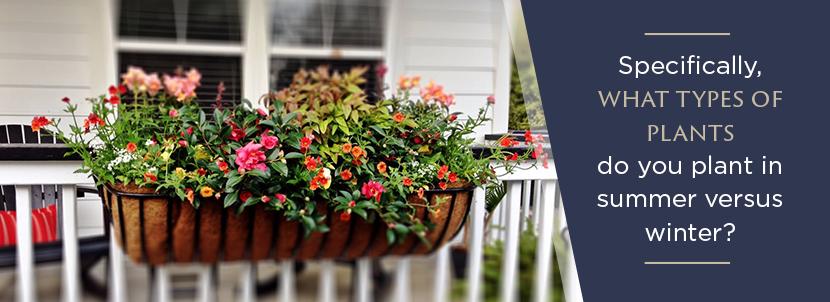 Window%20Boxes spring charleston florida types