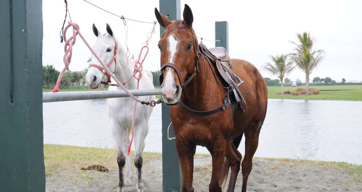 Florida Equestrian Communites Live The Lifestyle Nv